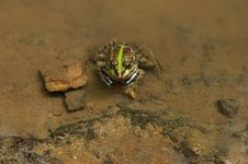 Free Frog Sitting In Water Stock Photo - 3138740