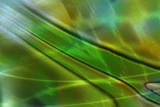 Composition, Green Plant Royalty Free Stock Image
