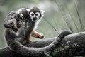 Free Monkey Stock Images - 31301954