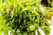Neem Is Green. Stock Image
