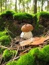 Free Mushroom Stock Photos - 31316073