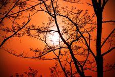 Free Tree On Sunset Background Royalty Free Stock Photo - 31312085