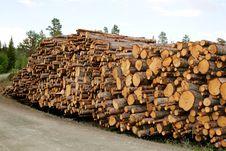 Free Timber Stock Image - 31315591
