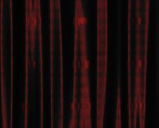 Free Red Curtain With Heart Pattern Royalty Free Stock Images - 31319459