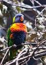 Free Colorful Bird Stock Photos - 31320613