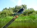 Free Dark Blue Dragonfly Sitting Above Water Stock Photo - 31322920