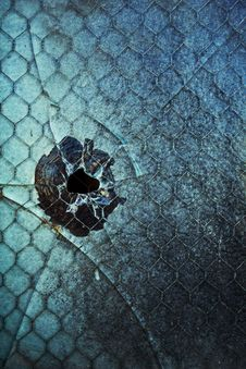 Free Bullet Hole In Window Stock Images - 31331714