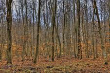 Free Forest In Autumn Royalty Free Stock Photography - 31335047