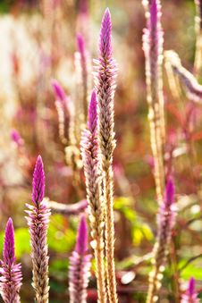 Free Flower Of Weed Grass Stock Photo - 31338520