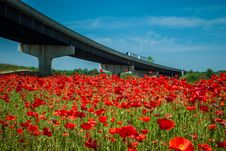 Red Poppy Field  And Highwa Overpass Stock Image