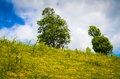 Free Landscape With Trees On Flank Of Hill Stock Image - 31342711