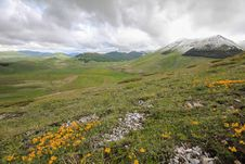 Free Flowers And Mountain Stock Photos - 31340133
