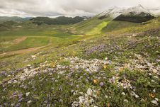 Beautiful Mountain Landscape With Flowers And Snow Royalty Free Stock Photos