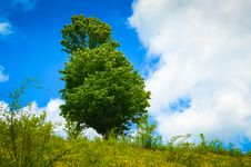 Free Landscape With Tree On Flank Of Hill Stock Photo - 31342960