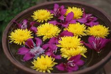 Free Flowers In Bowl Royalty Free Stock Images - 31344509