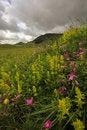Free Idyllic Mountain Landscape Royalty Free Stock Image - 31358436