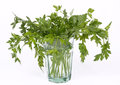 Free Bunch Of Fresh Parsley Royalty Free Stock Photography - 31359737
