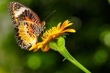 Free Closeup Butterfly On Flower Royalty Free Stock Photo - 31356975