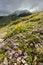 Free Wild Mountain Flowers Stock Image - 31359281