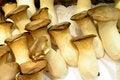 Free Fresh Chinese Mushrooms Stock Image - 31365721