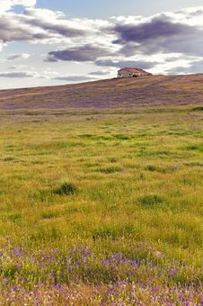 Free Cottage On The Hill Above A Blanket Of Flowers And Grass - Vertical Stock Photo - 31372670