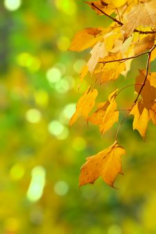Free Beginning Of Autumn Royalty Free Stock Photos - 31376438