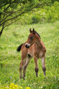 Free Foal Stock Photos - 31381043