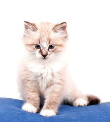 Small Kitten Stock Photo
