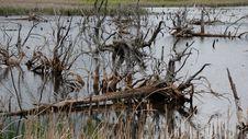 Free Barren Habitat Stock Image - 31386931
