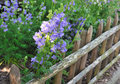 Free Fence With Flowers Stock Images - 31391604