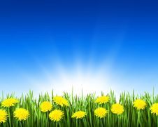 Free Grass With Flowers Royalty Free Stock Photography - 31390217