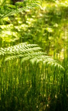 Free Fern Stock Photos - 31391533