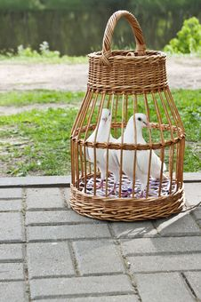 Free Two White Pigeons In A Wicker Cage Stock Image - 31392501