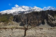 Free Dry Tree And Himalayas Mountain Range Royalty Free Stock Images - 31397209