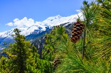 Cone On The Tree With Winter Mountain Peaks Background Royalty Free Stock Photo