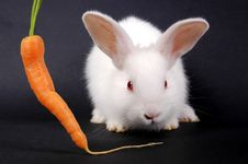 Free Young Rabbit Royalty Free Stock Photo - 3140625