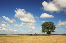 Free Alone Tree Royalty Free Stock Image - 3140716