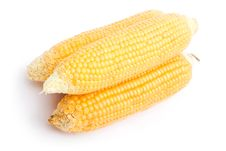Free Maize Royalty Free Stock Photography - 3140797
