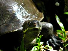 Turtle Up Close Stock Photo