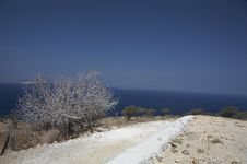 Free White Tree In Front Of Ocean Royalty Free Stock Image - 3141386