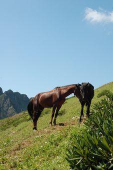 Free Brown Horses Stock Photo - 3141820