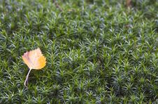 Free Fallen Leaf Royalty Free Stock Image - 3141946