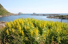 Free Yellow Flowers By The Ocean Royalty Free Stock Photos - 3142168