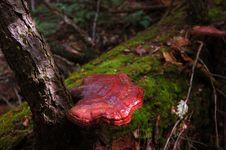 Free Mushroom Stock Images - 3143104