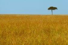 Free Serengeti Stock Images - 3143924