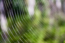 Free Spider S Web Close-up. Stock Images - 3144664