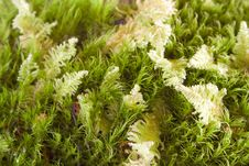 Free Mossy Hummock Stock Photos - 3144703