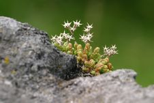 Spiny Flower On The Stone Stock Images