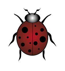 Free Red Ladybug Stock Image - 3144951