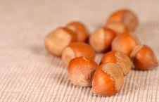 Free Whole Hazelnuts Royalty Free Stock Photography - 3145027